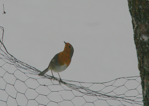 vogel 015