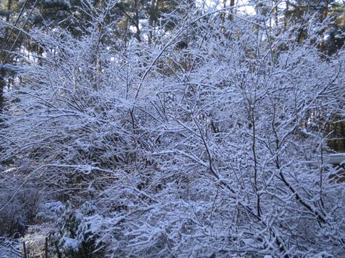 snow 60004