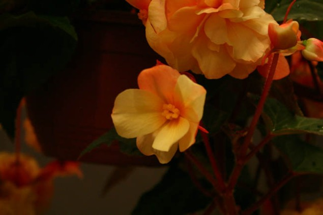 Flora 098