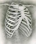 ribben.jpg