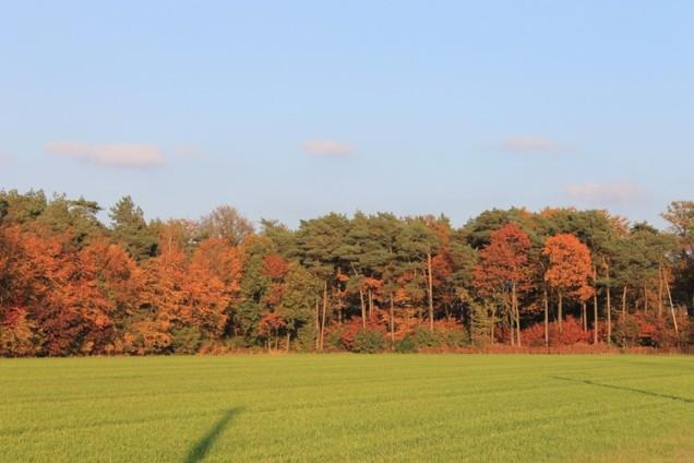 herfst7.jpg