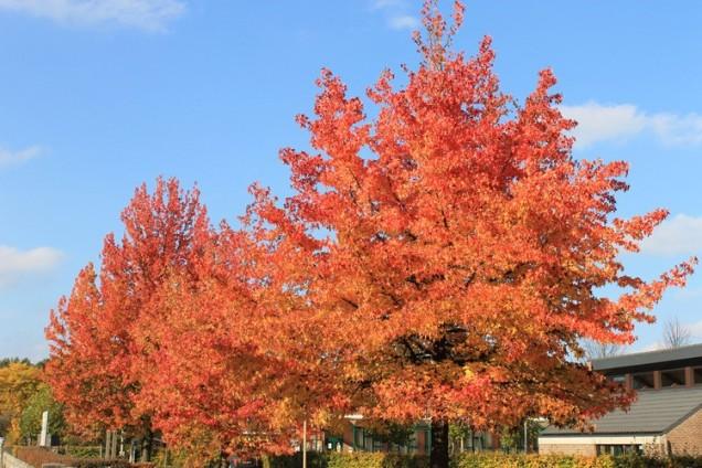 herfst3.jpg